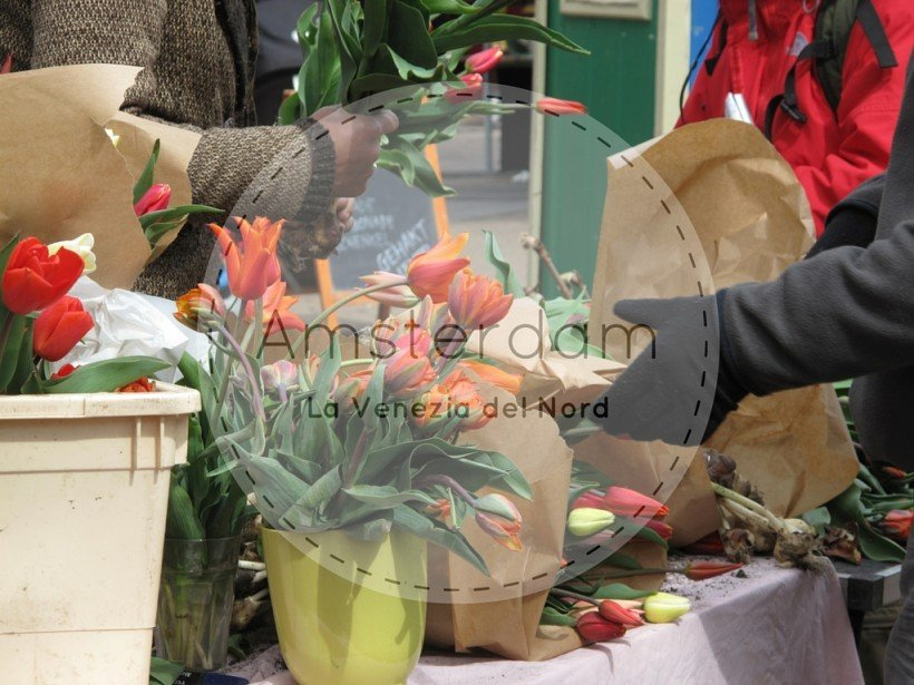 Amsterdam - Flo' in viaggio