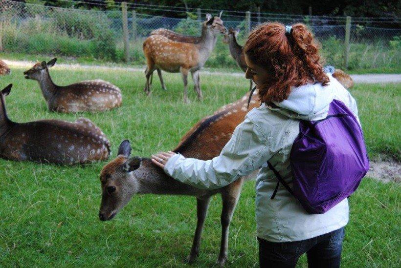 Deer park Aarhus