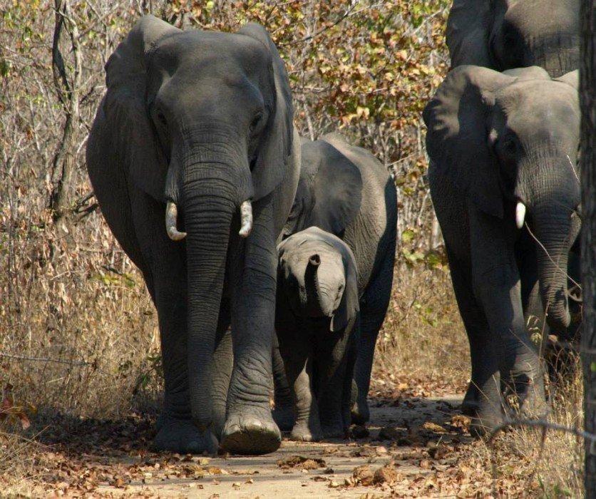 Malawi-Liwonde National park, Flo' in viaggio