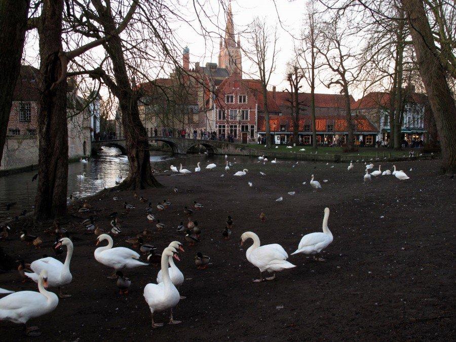 Bruges, fiandre- flo' in viaggio