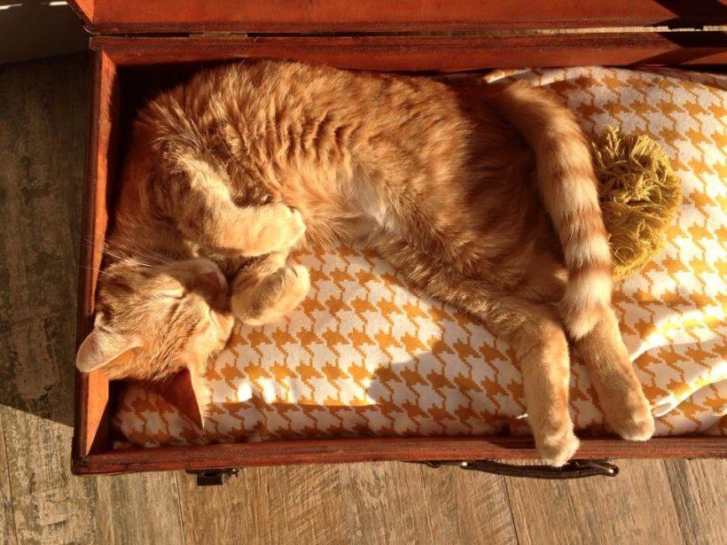 Romeow Cat Bistrot - Flo' in viaggio